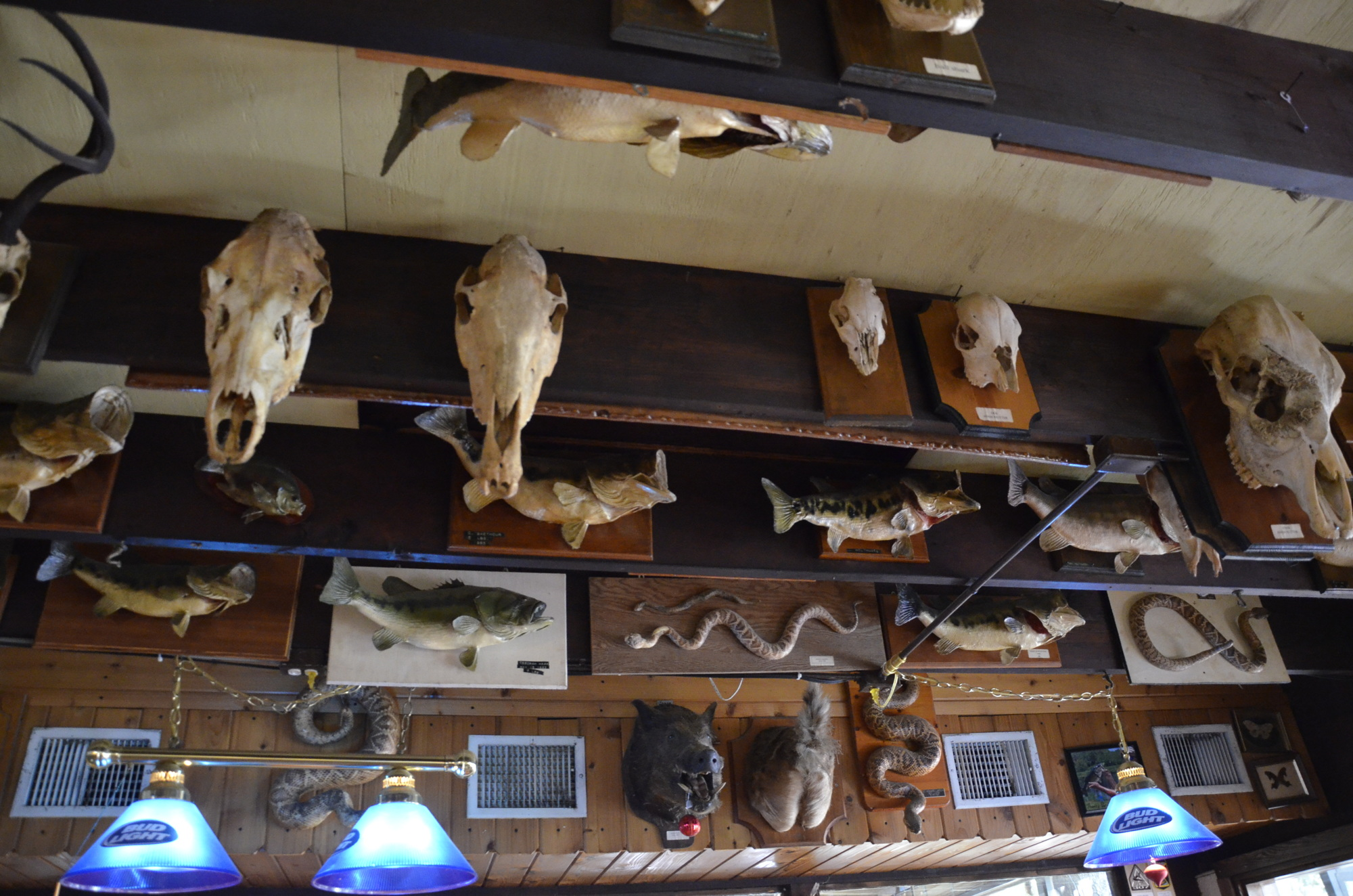 Most of Gamsky's stuffed and mounted specimens are still on display at Linger Lodge.