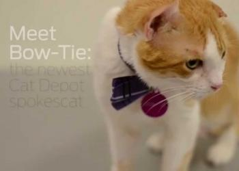 Meet Bow-Tie the spokescat for Cat Depot