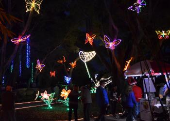 2015 Selby Lights In Bloom
