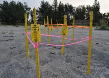 Turtle Watch volunteers mark off nests using wooden stakes and tape.