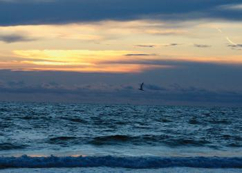 David Rosenthal took this sunset photo of a bird flying home on Longboat Key.