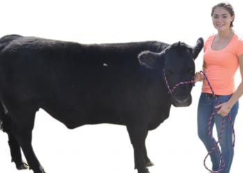 Lakewood Ranch senior Taylor Johnson with her steer. Josh Siegel.