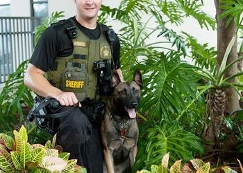 Deputy Brian Biegel and K9 Ryker attended 80 hours of training, which included searching dozens of vehicles, thousands of parcels and conducted more than a dozen building and area searches.