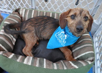 This dachshund puppy is one of several put up for adoption after being rescued from Napier's Log Cabin Horse and Animal Sanctuary.