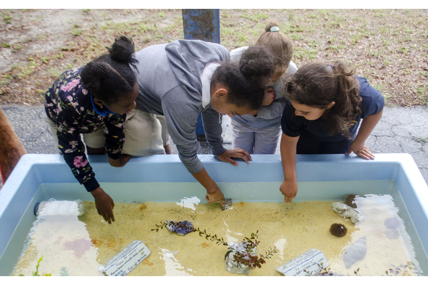 Boys and Girls club participants play in the Mote Marine touch tank.