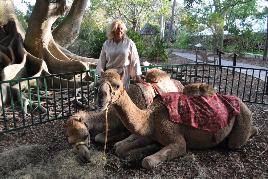Ellian Rosaire with Nomad and Oakie, three-year-old camels from Big Cat Habitat.