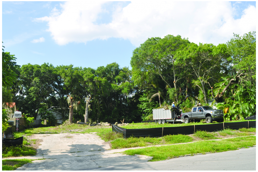 Sarasota tree cutting