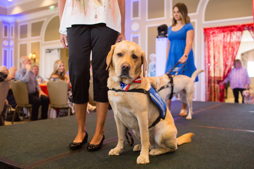 Levi, a Southeastern Guide Dog ambassador, poses for the camera.
