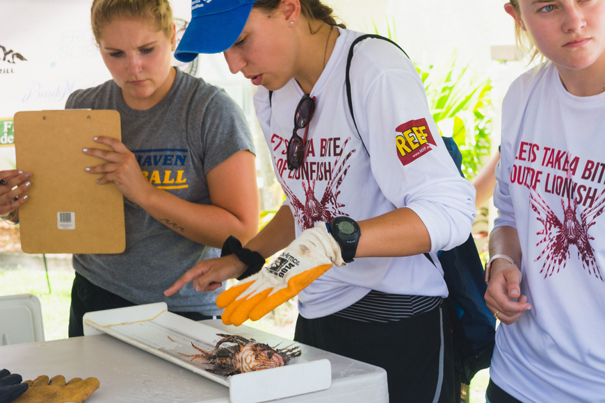 Ashley Yarbrough, center, measures one of the many lionfish harvested during the derby.