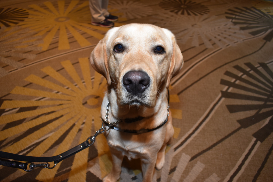 Pappy, Chrissy Terry's new guide dog, officially graduated from Southeastern Guide Dogs on March 1.