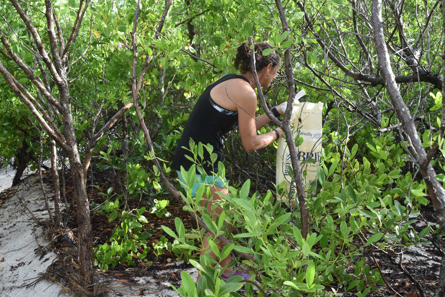 Stacy Mazza nearly disappears in search of beach waste.