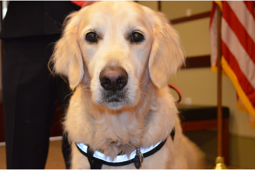 Hunter received a badge for his work as a therapy dog.