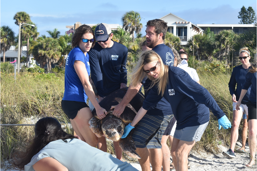 A team of staff and volunteers support every part of the turtle.