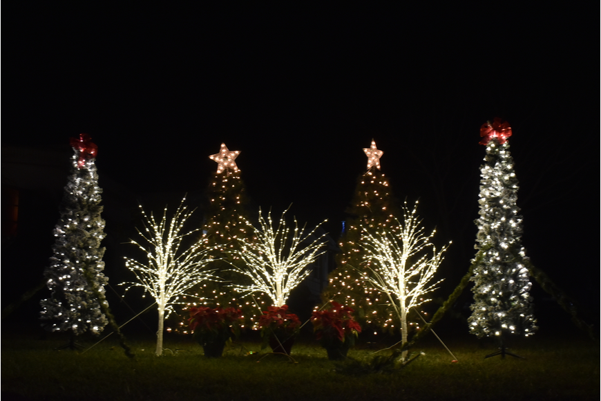 Near the Liar's Tree, a grouping of Christmas trees light up the night.
