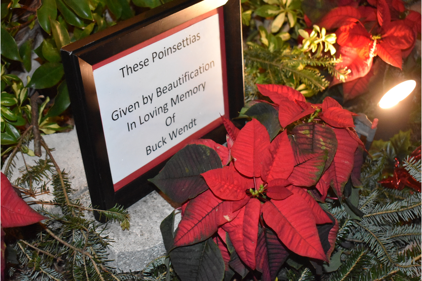 Poinsettias in honor of Buck Wendt frame the trunk of the Liar's Tree.
