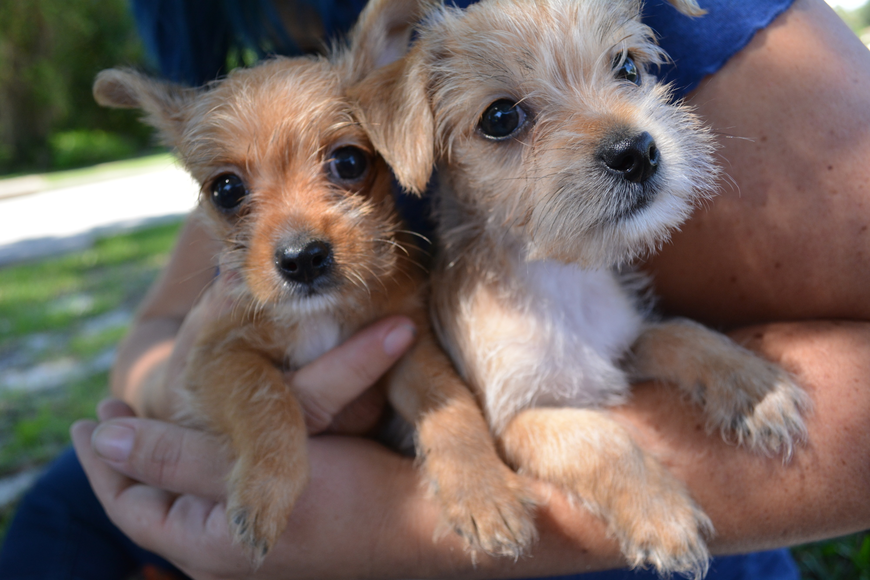 Howie and Harry won't be available for adoption for a few more weeks.