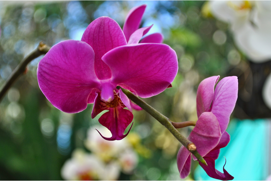 Orchids bloomed all over the gardens and were also available for purchase.