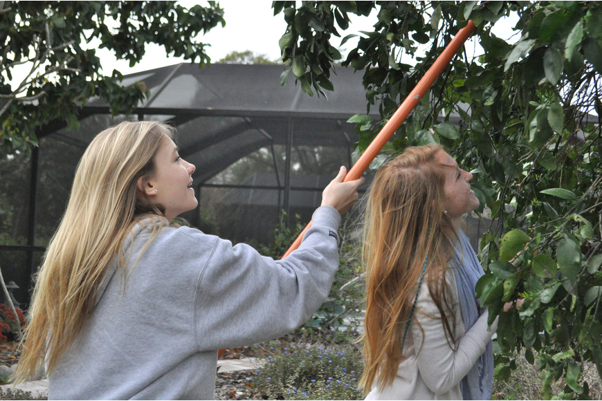Grace Connett and Jane Early of the Pine View Key Club joined the Kiwanis Club to glean fruit trees.