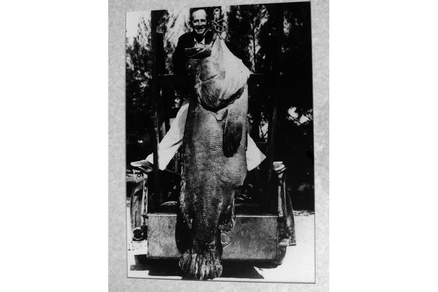 Artie Ferguson Sr. shows off a 230-pound grouper he caught in 1940, off Whitney Beach.