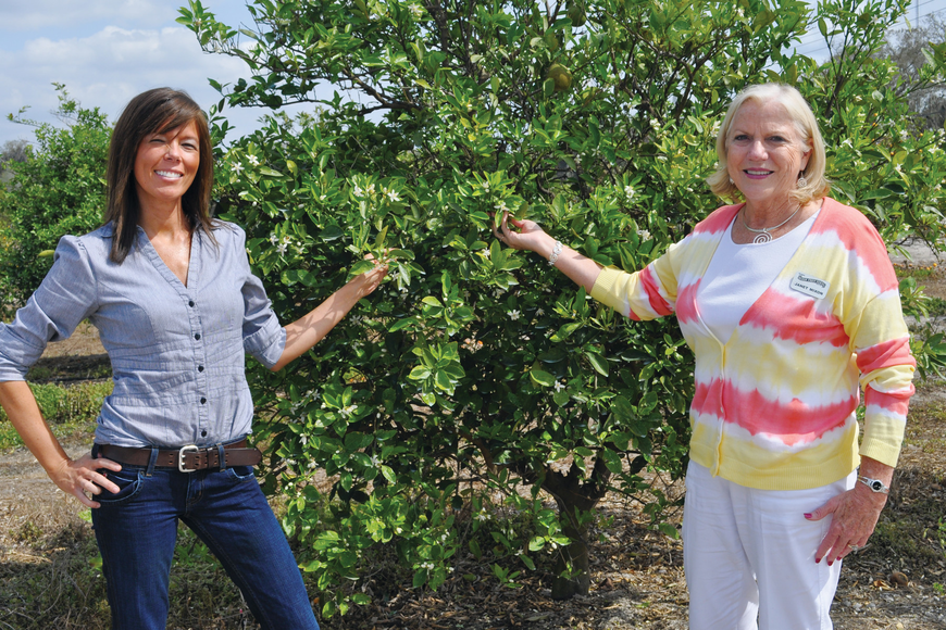 Sheri Gooby, event coordinator at Mixon Fruit Farms, and Janet Mixon, the farm's co-owner, show off orange blossoms, which started sprouting in early February, in the citrus grove.