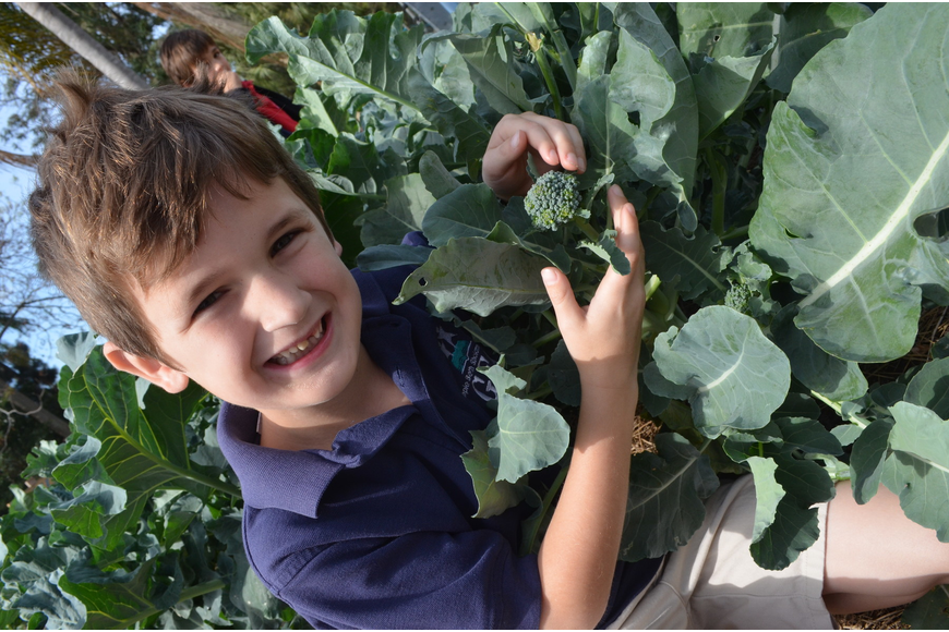 Charlie Lambert, 6, shows off the broccoli the class is growing.