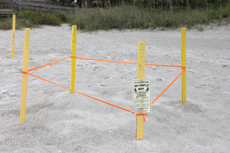 Beachgoers could see fewer staked nests like this one, photographed in August, as the result of Mote's new policy of marking nests weekly instead of daily. File photo.