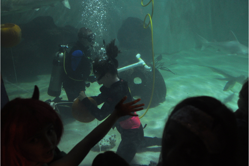 Don't miss the underwater pumpkin carving in the spooktacular shark tank.