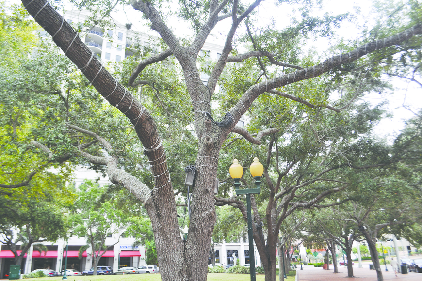 Lights installed at Five Points Park in 2011 remain in the trees, but have been shut off since June. A new system for lighting the park's trees could be forthcoming.