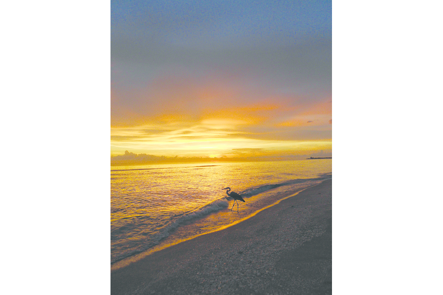 Richard Wulterkens submitted this sunset photo of a heron, taken on Siesta Key.
