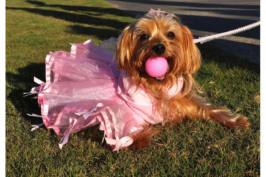 "Missy, 5, was ""Pretty in Pink"" and wanted to raise awareness about breast cancer with her program ""Bark for a Cure"". Missy loves golf balls so she carried around a pink one throughout the parade."