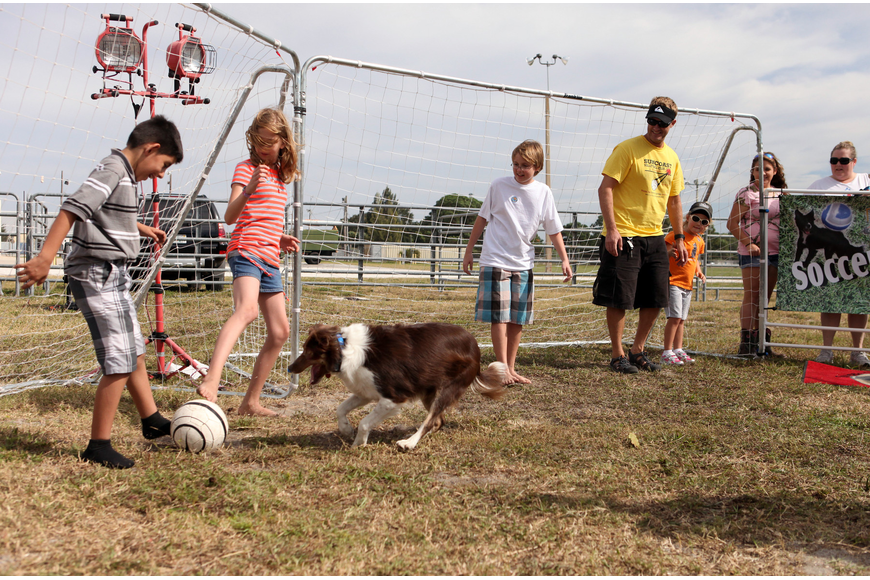 Kids and adults have fun taking part in the Soccer Collies show Saturday, Oct. 27, at the Sarasota Pumpkin Festival.