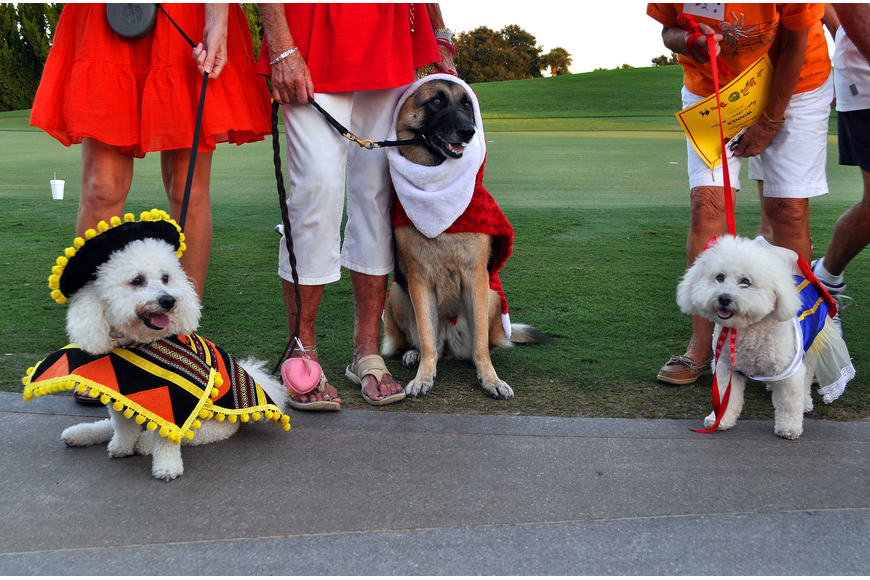 Sonny, Diamond and Brandy won first, second and third in the People's Choice contest Monday, Oct. 22, during the 2nd annual Halloween Doggie Parade at Stoneybrook Golf and Country Club in Palmer Ranch.