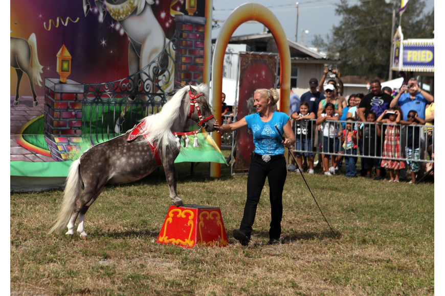 Stormy performs with Lisa Dupree during the Horses Horses Horses show Saturday, Oct. 27, at the Sarasota Pumpkin Festival.