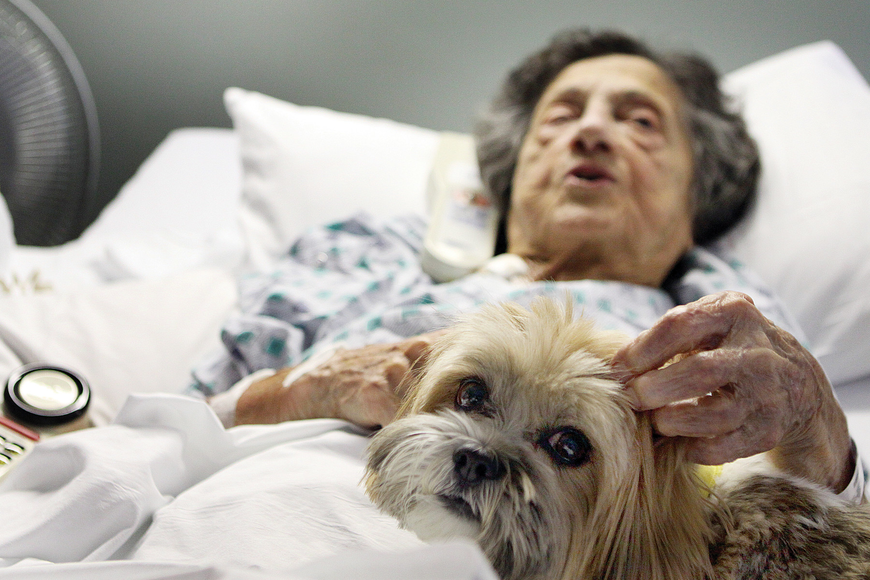 Yolanda Vodila enjoyed Parker's company while she rested in her hospital room. Parker is part of the Sarasota Memorial Hospital pet-therapy program.