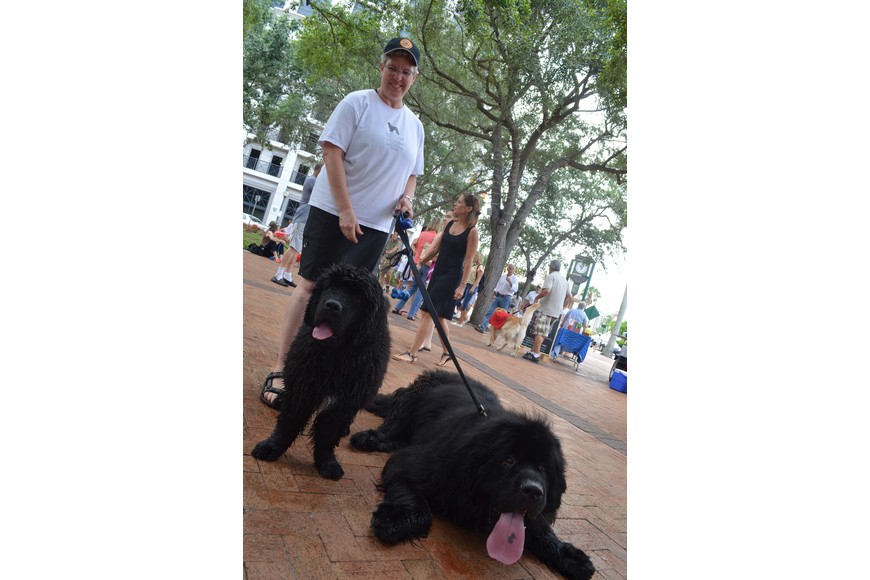Kate Kohler brings her 5-year-old Newfoundland, Max, and 16-week-old Newfoundland, Gus, to the farmers market almost every Saturday.