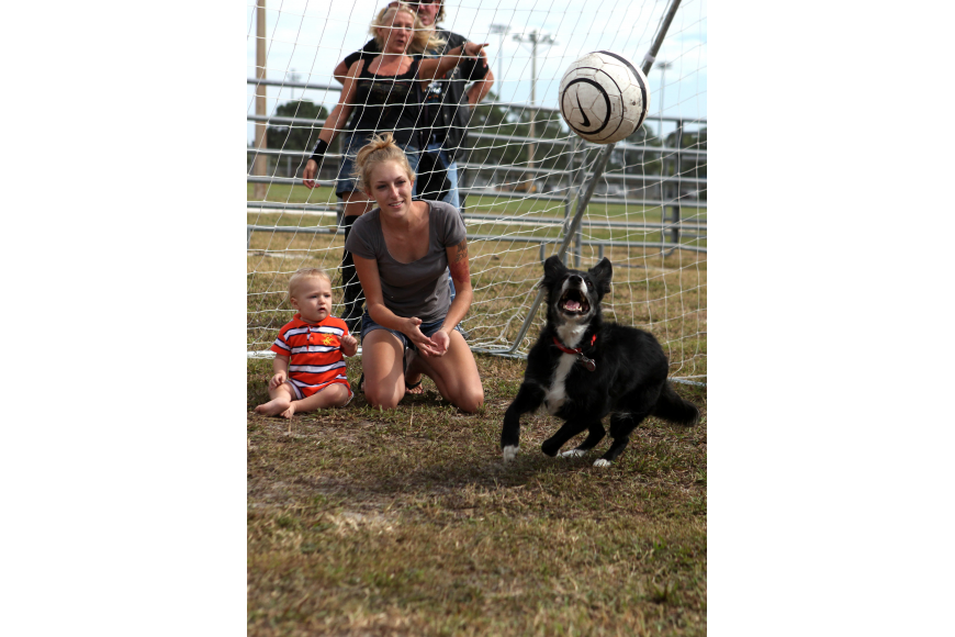 Jeanette Jehle and her son Nathan Crowe, 1 ½, have fun watching Ms. Z go after the soccer ball they threw while participating in the Soccer Collies show Saturday, Oct. 27, at the Sarasota Pumpkin Festival.