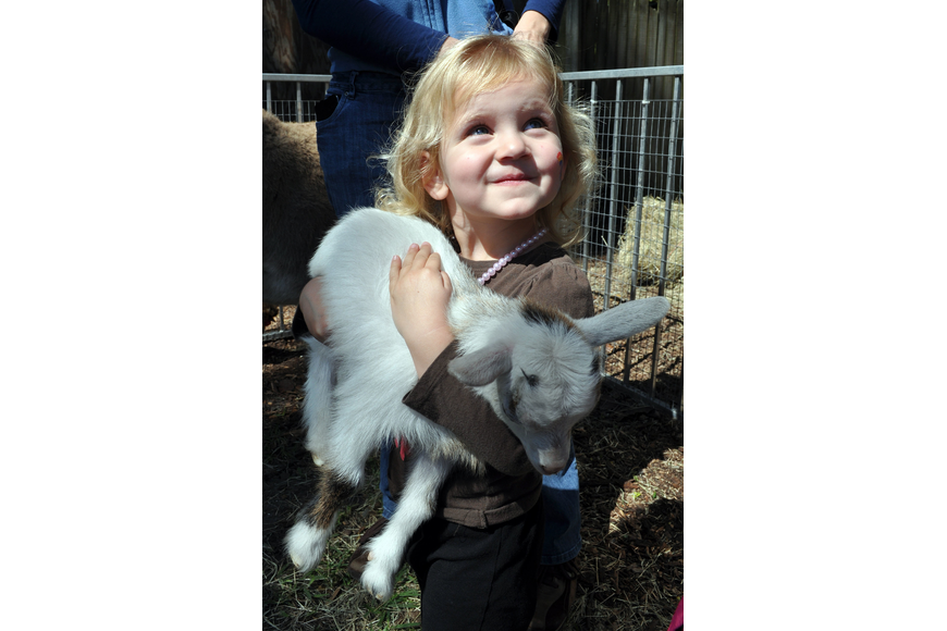 Shea Haines, 2, holds a baby goat in the petting zoo.