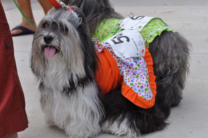 Jaci competed in the dog costume contest.