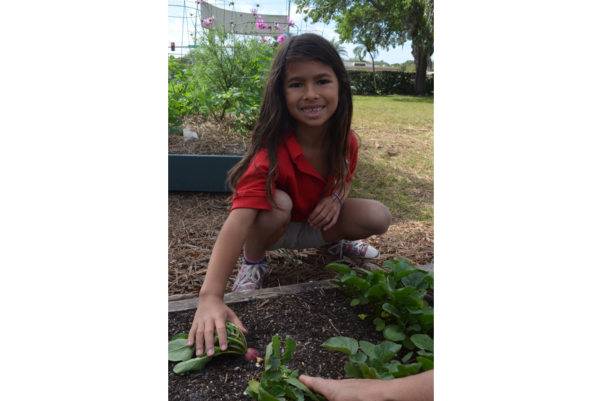 Grace Chung, 6, shows off the radishes the class has been growing.