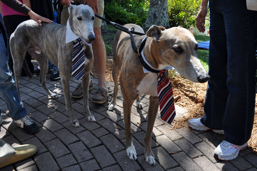 Hesiman and Alex wore their Good Friday best at the Greyhound Rescue Project's table.