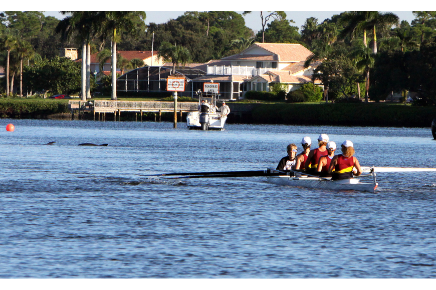 Some dolphins joined in on the fun while Cape Coral team competed in the Womens Masters 4+ division Sunday, Oct. 2 in the Sarasota 5000 Regatta out at Blackburn Point Park.