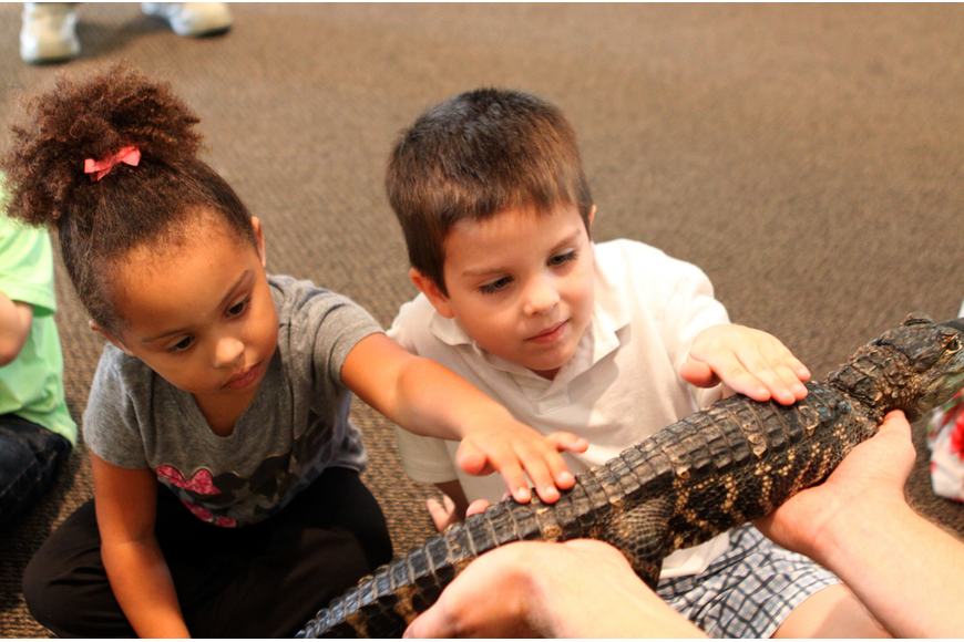 Franki Magnotti and Liam Lizotte pet Tinkerbell the alligator, Thursday, Jan. 12, inside the Parish Hall at St. Boniface.