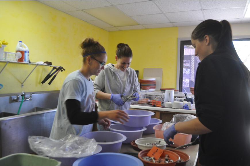 Dana Harenda, Sarah Olivero and Jamie Gamby prepare meals of thread herring for fish eaters at Save Our Seabirds, such as gulls, herons, pelicans and storks.