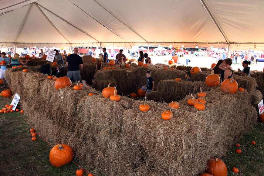 Children and adults had fun making their way through the hay maze and finding pumpkins to purchase.