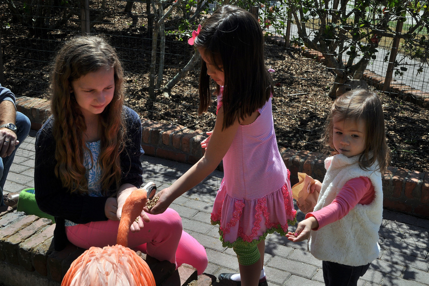 Charlotte Jaqua, 11, Camillle Kesling, 5, and Abigail DeSantis, 2, have fun feeding the flamingos at Jungle Gardens.