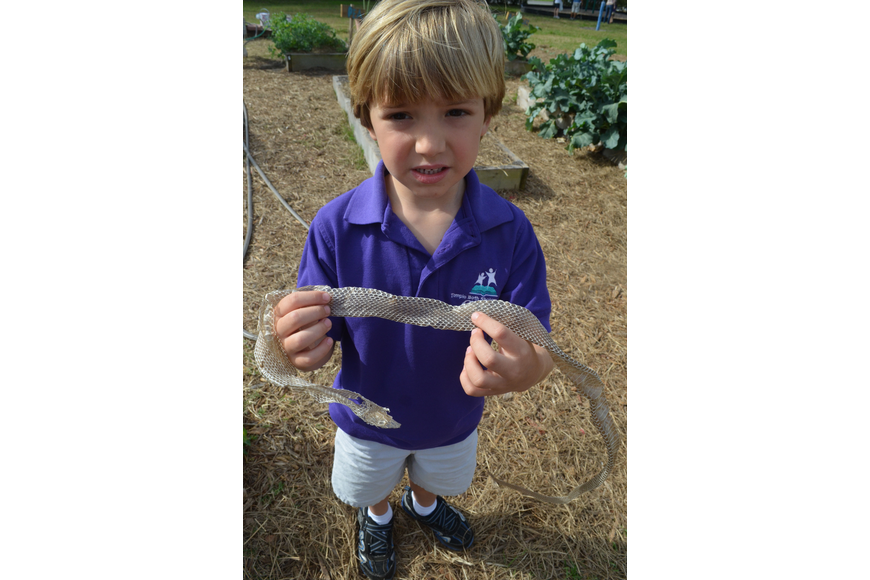 Sebastian Gammicchia, 5, asks questions about a skin a snake shed.
