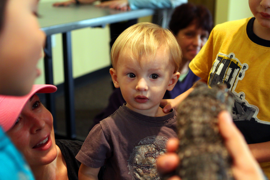 Max Murphy was a little unsure of Tinkerbell, the alligator that visited St. Boniface's preschool, Thursday, Jan. 12, inside the Parish Hall at St. Boniface.
