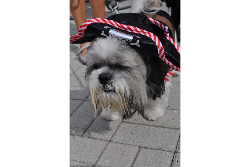 Charlie, owned by Judy DeFusco, won the costume contest.